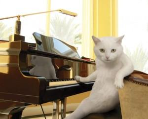 Wait - that's Cat Stevens?