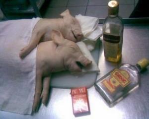 Funny-Drunken-Pig