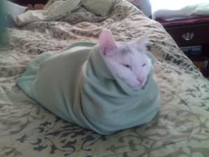 Cat swaddle